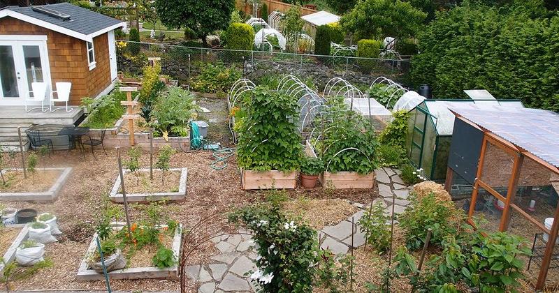 00-featured-homesteading-backyard-books.jpg