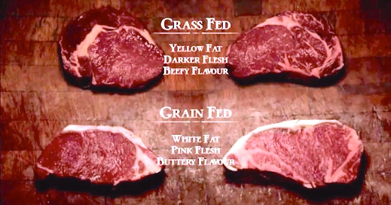 grass-grain-fed-beef.jpg