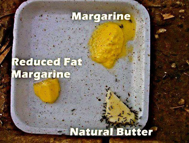margarine-the-ant-test.jpg